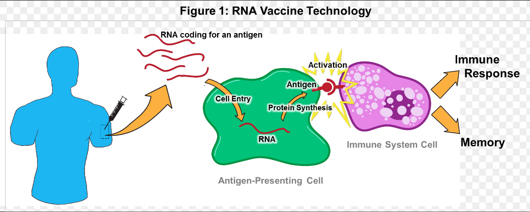 """Het """"coronavaccin"""" gaat werken! Lees hier hoe dat wordt georganiseerd"""